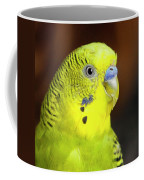 Portrait Of Budgie Birds Coffee Mug