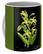 Vintage Orchid Print On Black Paperboard Coffee Mug