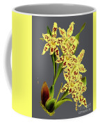 Orchid Old Print Coffee Mug