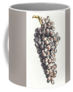 A Bunch Of Grapes By Johan Teyler  1648-1709  Coffee Mug