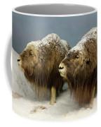 A Pair Of Musk Oxen, International Wildlife Museum, Tucson, Ariz Coffee Mug