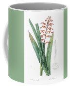 African Flag Illustration From Les Liliacees  1805 By Pierre Joseph Redoute   1759 1840  Coffee Mug