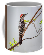 Arizona Ladderback Woodpecker Coffee Mug