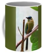 Blue-crowned Motmot Coffee Mug