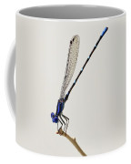 Blue Ringed Dancer Damselfly Coffee Mug