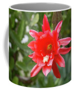 Bold Christmas Beauty - Orchid Cactus Bloom In Luscious Red Coffee Mug