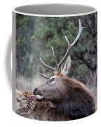 Bull Elk Grooms Himself Coffee Mug
