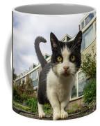 Close Up Cat On The Street Coffee Mug