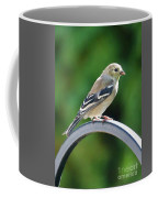 Closeup Of Goldfinch Coffee Mug