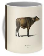 Cow  Bos Brachyceros  Illustrated By Charles Dessalines D' Orbigny  1806-1876  Coffee Mug