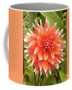 Dahlia Bloom Flower Coffee Mug
