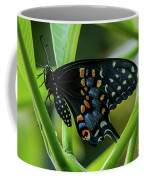 Eastern Black Swallowtail - Closed Wings Coffee Mug