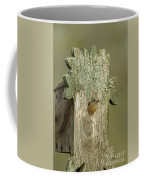 Eastern Bluebird - 0141-2 Coffee Mug