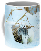 Ermine Coffee Mug by Michael Chatt