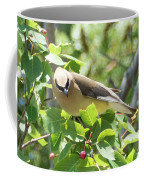 Eying The Prize Coffee Mug by Sally Sperry