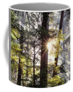 Forest Sunrise Coffee Mug