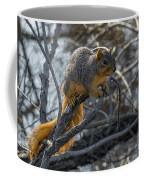 Fox Squirrel - 8988 Coffee Mug