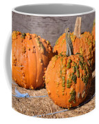 Fresh Butternut Pumpkins Coffee Mug