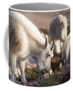 Grazing On Mount Evans Coffee Mug
