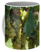 Green Grapes On The Vine 10 Coffee Mug