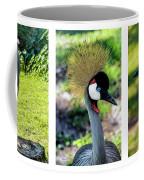 Grey Crowned Crane Gulf Shores Al Collage 6 Triptych Coffee Mug