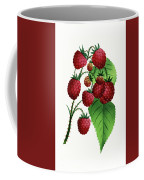 Hepstine Raspberries Hanging From A Branch Coffee Mug
