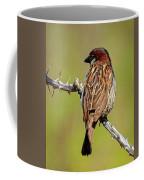 House Sparrow V1818 Coffee Mug