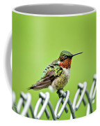 Hummingbird On A Fence Coffee Mug