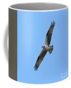 Intense Osprey In Flight Square Format Coffee Mug