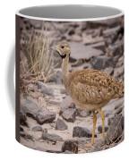 Karoo Korhaan Coffee Mug