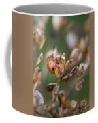 Lady Bird / Lady Bug In Flower Seed Head Coffee Mug