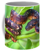 Madagascar Ground Boa Acrantophis Coffee Mug