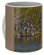Mallards Flying By Coffee Mug