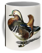 Mandarin Duck  Aix Galericulata Illustrated By Charles Dessalines D' Orbigny  1806-1876 1 Coffee Mug