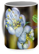 Photinia Spring Coffee Mug
