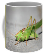 Portrait Of A Great Green Bush-cricket Sitting On The Pavement Coffee Mug