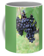 Purple Grape Bunches 20 Coffee Mug
