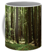 Redwood Trees Armstrong Redwoods St Coffee Mug