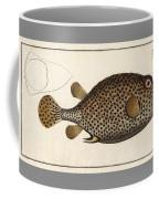 Spotted Trunk Fish  Coffee Mug