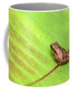 Spring Peeper Hyla Crucifer Coffee Mug by Rick Veldman