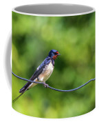 Swallow  Hirundo Rustica  Coffee Mug