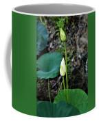 Two White Lotus Flower Buds Coffee Mug