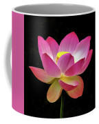 Water Lily In The Light Coffee Mug by Howard Bagley