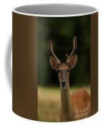 White-tailed Deer - 8282-2 Coffee Mug