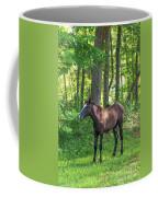 Young Brown Colt Coffee Mug