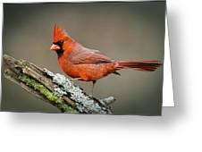 Portrait Of Cardinal  Greeting Card