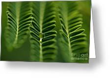 A Green Drop Greeting Card