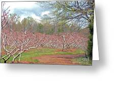 A Peach Orchard   Greeting Card