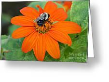 A Taste Of Honey Greeting Card