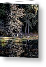 Alder Tree Reflection In Pond Greeting Card